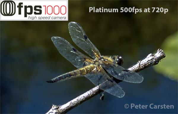 fps1000 DragonflyPlatinum_byPeterCarsten