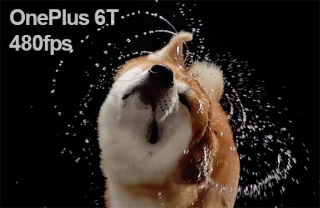 OnePlus 6T Slow Motion Dog