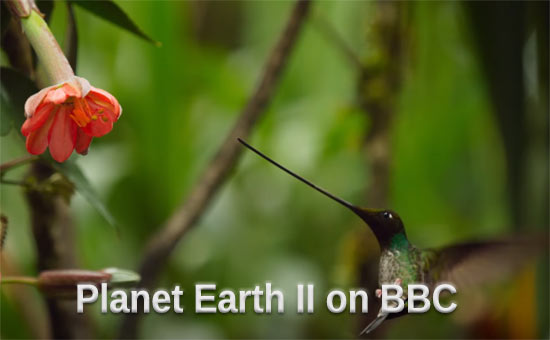 Planet Earth II Slow Motion